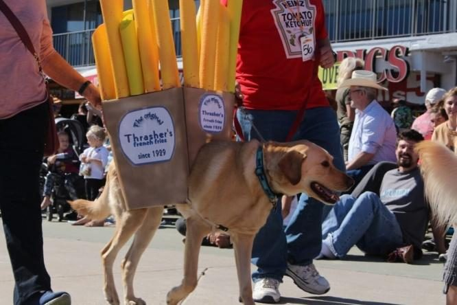 Howl-O-Ween Pet Parade
