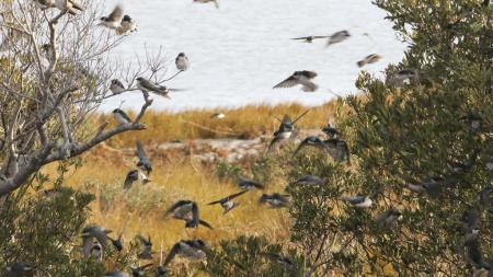 Fans flock to annual Birding Weekend