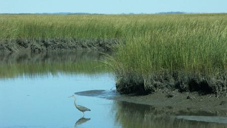 Creature Feature: Egrets vs. Herons