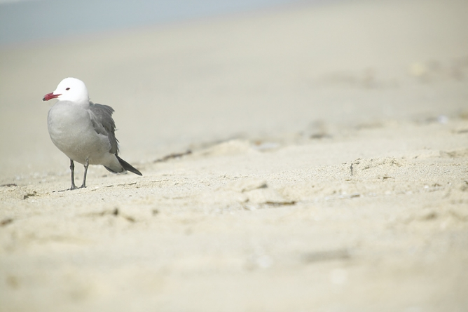 Take stroll on Assateague to kick off 2013