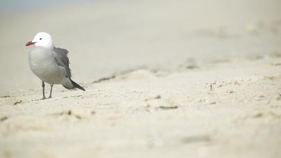 Resort could see more phocine off-season visitors