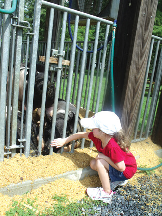 Worcester County Fair this weekend