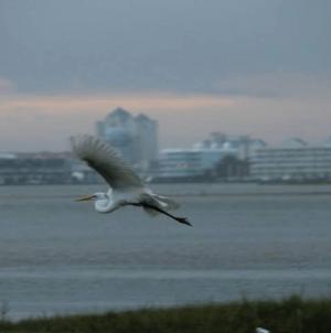Maryland Bird-Watching After a Storm