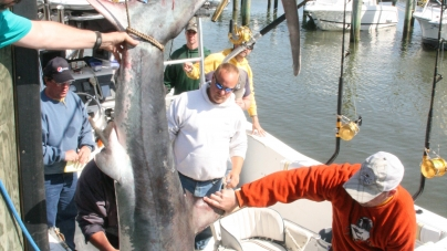 Big mako, thresher win top prizes