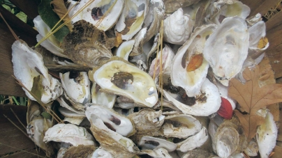 Aquaculture spat grows deeper than the oysters