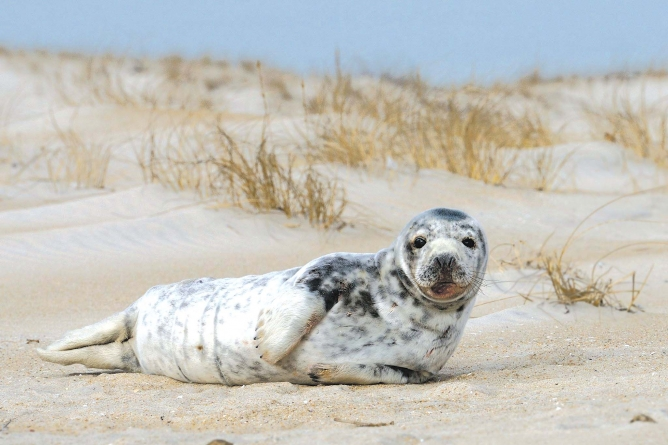 Harbor seals: OK to look, but not too closely