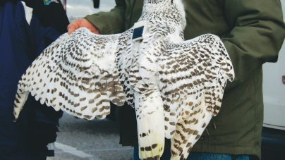 Owl's GPS more than just ornithological curiosity