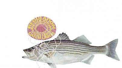 New regional rockfish regulations carry a sting