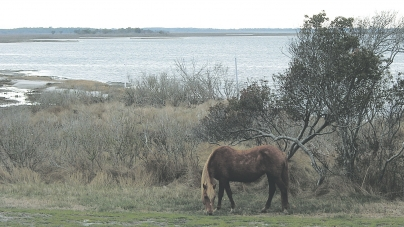 Assateague seeks input on higher fees, claims inflation
