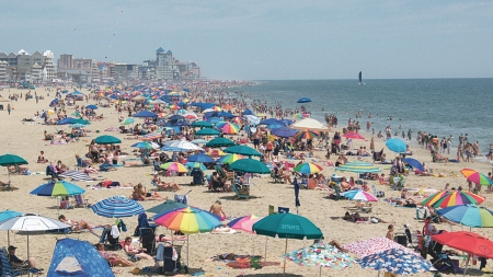 Creature Feature: Ocean City's Sea Lice Outbreak