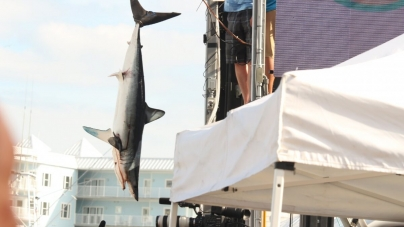 16 looks at the World's Biggest Bill Fish Tournament (16 photos)