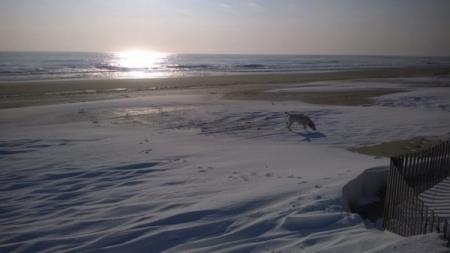 Love affair with the beach