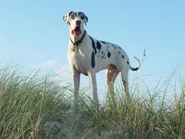 Boardwalkin for pets