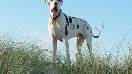 Biggest Dog on the Boardwalk: Boardwalkin for pets