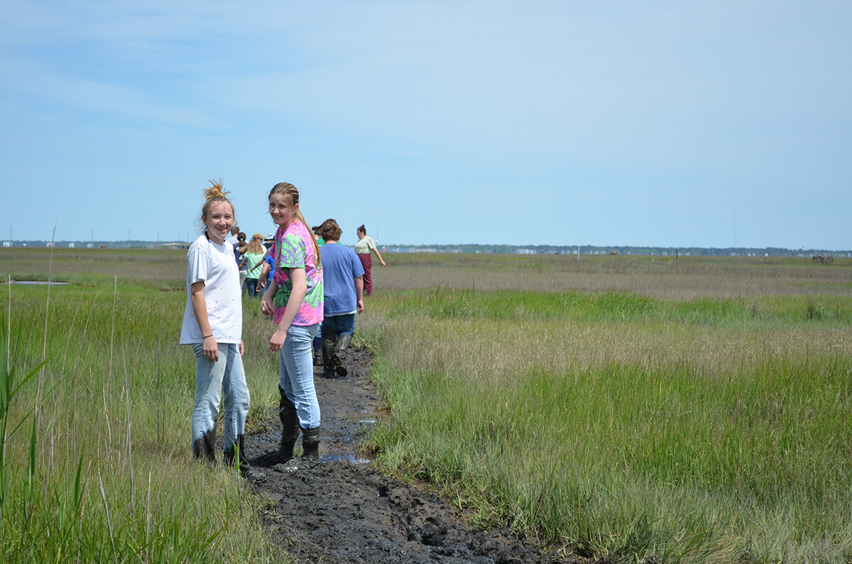 Marsh Cordgrass