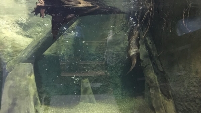 Wally Gordon River Otter Exhibit Opens in Pocomoke City
