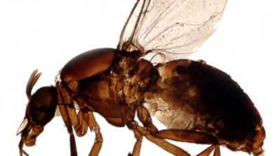 An ill wind: Biting flies on the Boardwalk explained