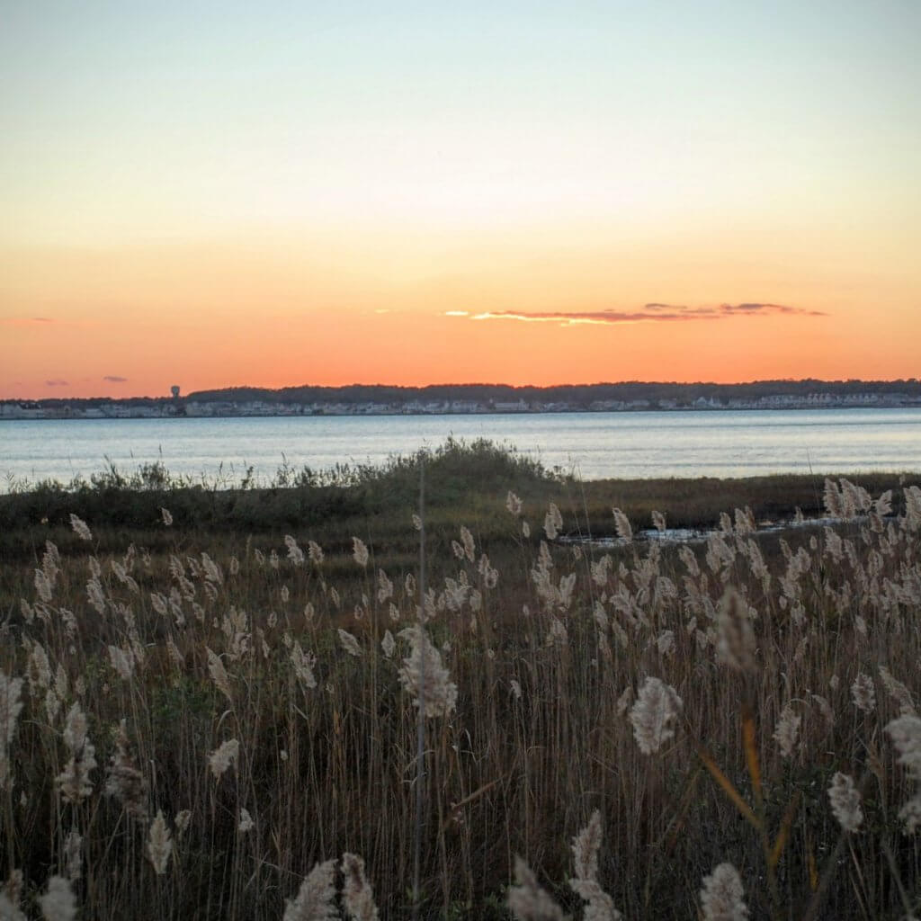 Isle of Wight marsh