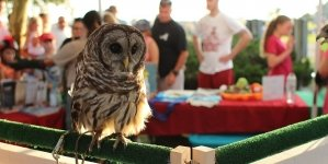 Owls and ice cream at Sundaes in the Park