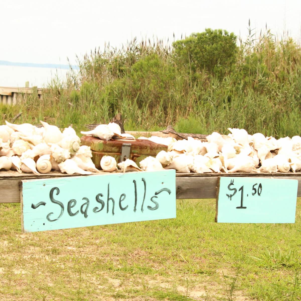 Seashell stand