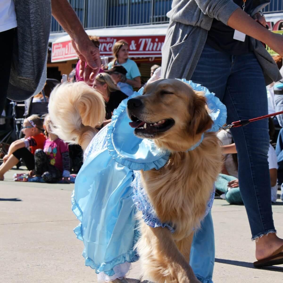 Dog in a bonnet