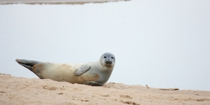 Creature Feature: It's almost seal season