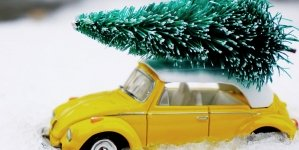 Where to drop off your Christmas trees in Worcester County