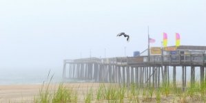 Pictures from a beach cloaked in fog