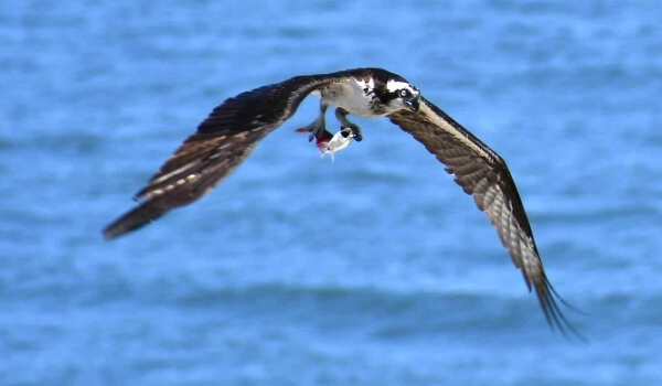 Photo Friday: The Natural Wonders of Ocean City