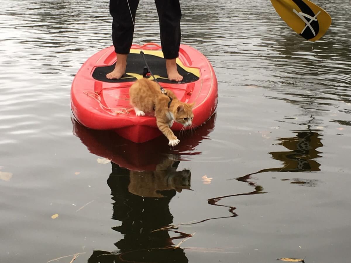 Pip on a paddle board