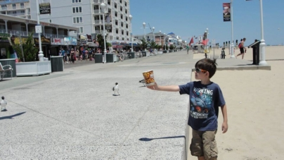 """Ocean City From a Kid's Perspective"" as told by Connor Daley, age 9"