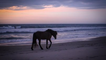 Our First Photo Friday of the Season! Cruisin' OC, Assateague Ponies and More
