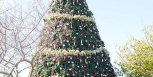 Winterfest Prep: Northside Park in Ocean City