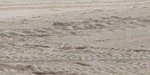 Now: Seal Spotting Ocean City